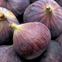 Naturally high in dietary fibre, figs can be a useful food to include in the diet for those watching their weight. High fibre foods provide feelings of fullness and can reduce hunger and cravings. Figs also contain prebiotics, which help support the pre-existing good bacteria in the gut, improving digestive wellness.