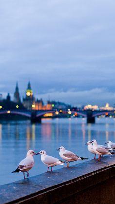 city, london, england, street, river, gulls, lamps, light, bokeh