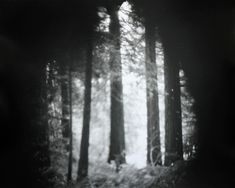 Site-Specific Pinhole Cameras Constructed From Nature Capture the Pacific Northwest (Colossal) Camera Obscura, Pinhole Camera Images, National Geographic Travel, Creators Project, Colossal Art, World Images, Travel Photographer, Landscape Photos, Pacific Northwest