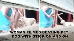 A complaint made by a concerned citizen this week illustrates yet another shocking case of animal mistreatmeant.  The witness...