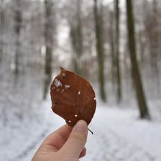 【krohnologie】さんのInstagramをピンしています。 《#leaf #schnee #snow #wald #waldspaziergang #coldmornings #januar #beautyofnature #orman #forest #bäume #森林 #下雪了 #叶子 #德国 #冬天 #nikonphotography #nikond5500 #teutoburgerwald #wintermorgen》