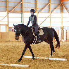 Equestrian, Horses, Engagement, Lifestyle, Animals, Instagram, Animales, Animaux, Horseback Riding