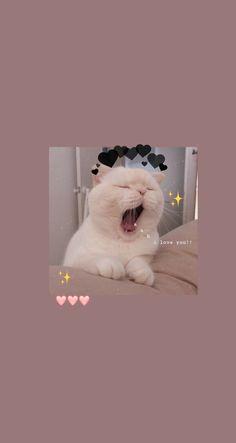 Wallpaper Gatos, Iphone Wallpaper Cat, Funny Cat Wallpaper, Cute Fall Wallpaper, Cute Panda Wallpaper, Bear Wallpaper, Cute Disney Wallpaper, Cute Wallpaper Backgrounds, Animal Wallpaper