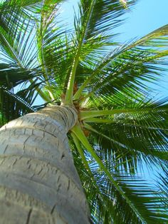 Trees To Plant, Plant Leaves, Beautiful World, Beautiful Places, Tree Saw, I Love The Beach, Tropical Paradise, Wonders Of The World, Palm Trees