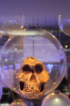 Hello...The fossil display at the Sterkfontein Caves in the Cradle of Humankind World Heritage Site, South Africa.