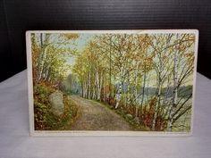 Northern Autumn Birch Drive, Pub: Phostint Card, Dated 8/13 1909 Postcard Stamp