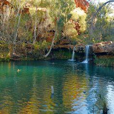 Fern pool...North West Australia