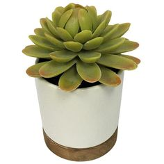 Artificial Plant in White Pot Small - Threshold™ : Target ($7.99) ❤ liked on Polyvore featuring home, home decor, floral decor, white home accessories, white home decor and white pot