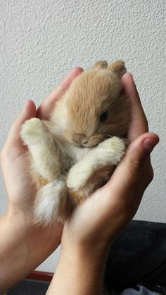 Funny Animals Pictures To Make Your Day Photos) – The Viraler Hamsters, Rodents, Animals And Pets, Funny Animals, Baby Buns, Cute Little Animals, Tier Fotos, Cute Bunny, Tiny Bunny