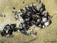 tide pool etiquette « Beach Treasures and Treasure Beaches