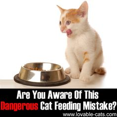 Are You Aware Of This Dangerous Cat Feeding Mistake?►►http://lovable-cats.com/are-you-aware-of-this-dangerous-cat-feeding-mistake/?i=p