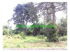 Land for Sale Nang Rong ขายทดนนางรองNew Today
