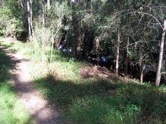Bogle & Chandler bodies site Lane Cove River