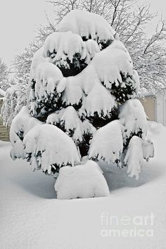 It Snowed! by William Norton