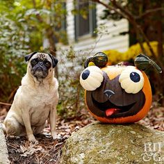 Move over, Jack, there are other outdoor pumpkin decorations in town. These genius tips for decorating pumpkins will make your Halloween yard decorations the envy of the neighborhood. We'll provide tips and tricks for carving, painting, adorning, and displaying festive pumpkins.