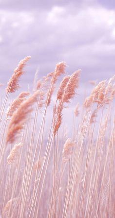reminds me of the beautiful plains of kansas