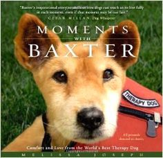 """Baxter was known as the """"World's Best Therapy Dog."""" Moments With Baxter is a collection of touching, true stories about Baxter, and the hospice patients and their families to whom he brought so much comfort and love."""