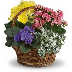 Flowering Planter Basket of many sizes and colors. Here at Florist in Vancouver Canada we have custom made planters for spring or fall. call to order.