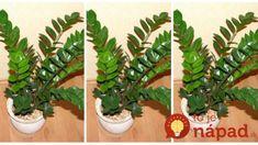 Túto izbovku by mal mať doma každý: Nemusíte ju kupovať, stačí 1 list a takto ľahko ju rozmnožíte! Cactus Plants, Diy And Crafts, Flowers, Gardening, Desserts, Gardens, Green Garden, Composters, Garten