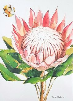 King Protea in watercolour- Print by Tina Maher Watercolor Plants, Watercolor Leaves, Watercolor Art, Watercolour Paintings, Watercolours, Botanical Drawings, Botanical Art, Flower Drawings, Protea Art