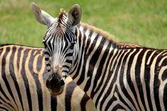 Check out TeachKind\'s list of animal-friendly virtual field trips! #teachkindness