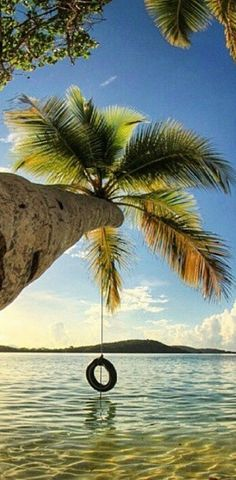 Just an old tire swinging on a palm tree over a beach in paradise /// #travel #wanderlust