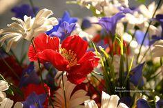 Купить Букет полевых цветов. Триколор - ярко-красный, красный, триколор, синий, белый