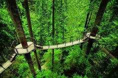 Suspended tree top bridges in Vancouver,BC Canada