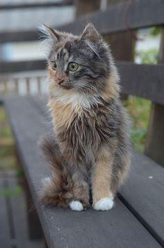 Kitten on park bench