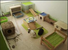 aire de jeux pour lapin