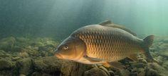 Mooie onderwaterfoto van Janny Bosman.