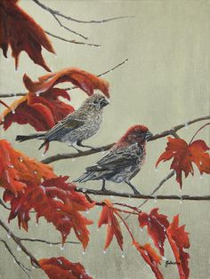 Fine art paper and canvas prints from my original painting of a pair of Purple Finches with shades of red and orange autumn leaves after a rain stormby Johanna Lerwick Wildlife / Nature Artist. Original Artwork, Original Paintings, Fine Art Prints, Canvas Prints, Wildlife Nature, Nature Paintings, Bird Art, Fine Art Paper, Fine Art America