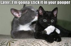 oh dear perverted cats