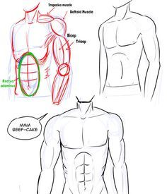 Unique Suggestions Anime Chest How To Draw 2019 In 2020 Drawing Anime Bodies Anime Drawings Manga Drawing