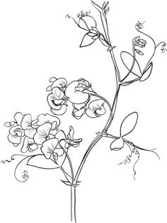 sweet pea coloring pages # 34