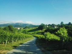 Un buen paseo y a descansssar... Viñedos de txakoli en Hondarribi.  #txakoli #igersdonostia #igersaquitaine #travelphotography #travelgram #côtebasque #paisvasco #basquecountry #paysbasque #basquestyle