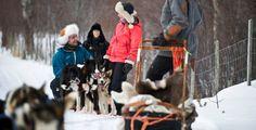 Viaje Laponia trineo husky / Travel Lapland husky safari