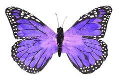 Purple Feather Butterfly 54cm - Butterflies