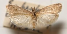 Moth, Insects, Board, Planks