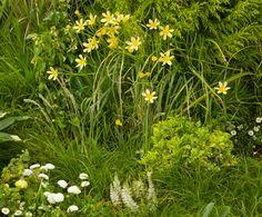 I want a meadow like this!  rockandrose.com