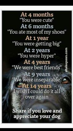 I appreciate all animals/birds/creatures. And I wish all of you, who love their pet - much, much more than 14 years and let those years be happy. Dogs can live until 20 years. All Dogs, I Love Dogs, Puppy Love, Best Dogs, Cute Dogs, Dogs And Puppies, Doggies, Maltese Puppies, Dogs Of The World