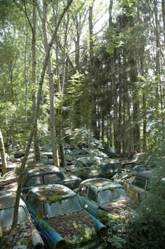 Auto Graveyard in the Woods