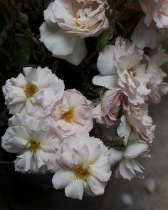 Exquisite wedding flowers, romantic bridal bouquets and wild floral arrangements Winter Wedding Flower Inspiration, Winter Wedding Flowers, Rose Wedding, Floral Wedding, Wedding Bouquets, Flowers London, Seasonal Flowers, Flower Farm, Wedding Events