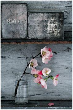 still life, apple blossom.