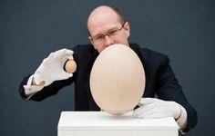Telur terbesar Yang pernah ada dimuka bumi kini dilelang