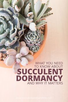 Wow! I had no idea succulents go through a dormancy period!