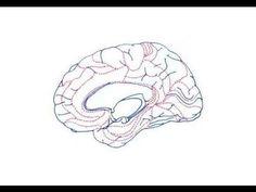 Neurología de la Música y el Lenguaje 04/12 - Hemisferios Cerebrales - P...