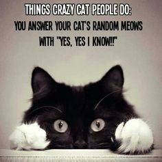 And yes, I so have conversations with my cat...