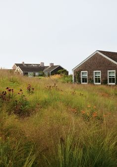 planting w/native grasses, Purple Coneflower (Echinacea purpurea) and Butterfly Weed (Asclepias tuberosa), by Piet Oudolf (photo by Dana Gallagher), Nantucket, Massachusetts