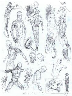 Anatomy's study Vittorio Bustaffa